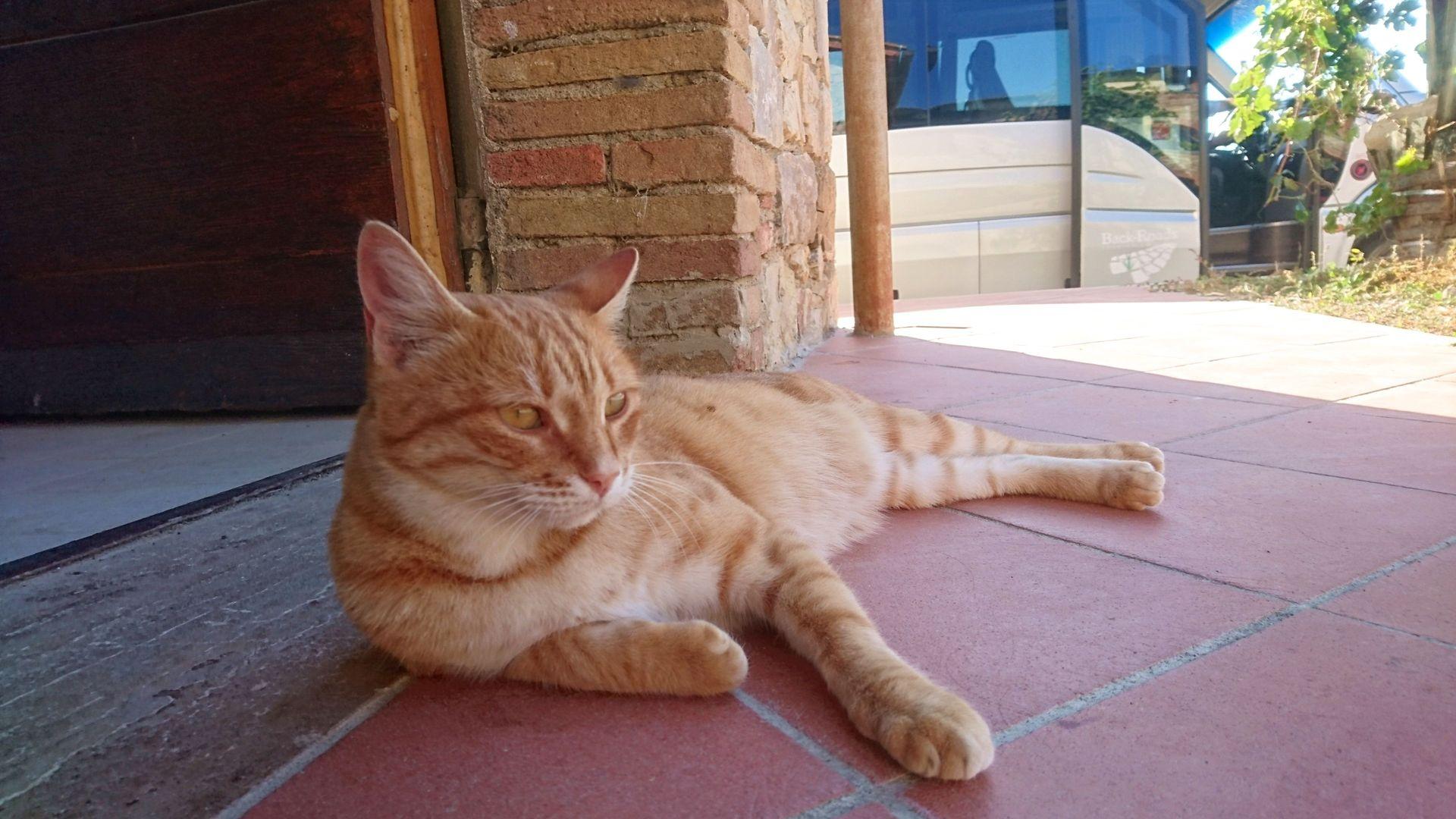 Isodi cat