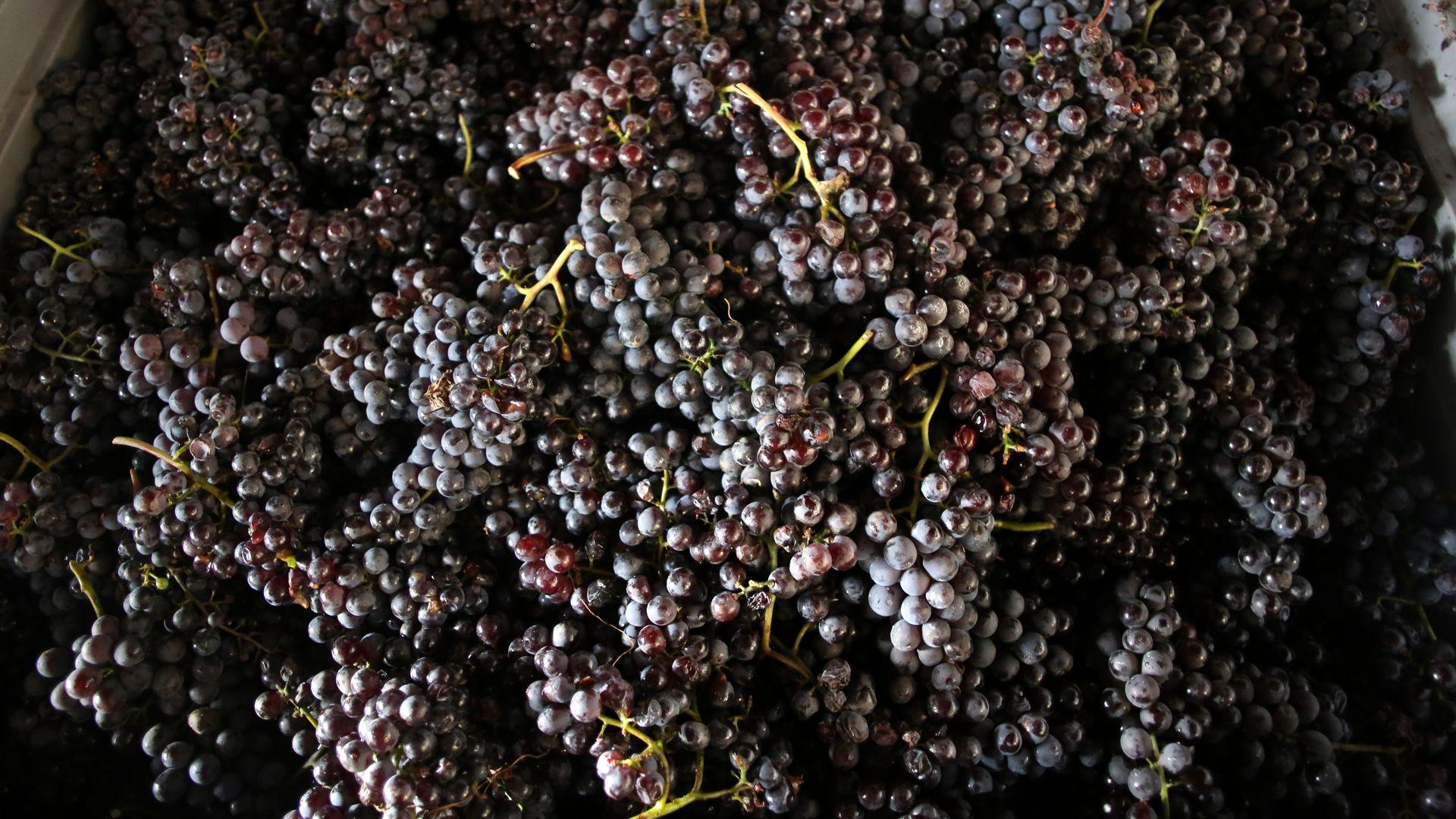 Piemonte Nebbiolodruvor
