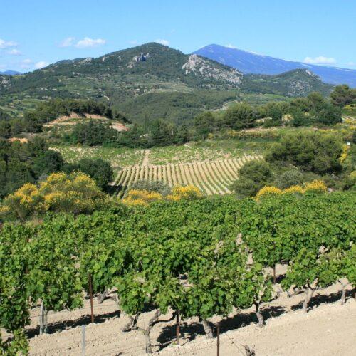 Hallbus vinresa till Provence/södra Rhône vy över dramatiskt och vackert landskap