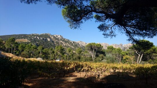 Vinprovning av sydfranska röda viner