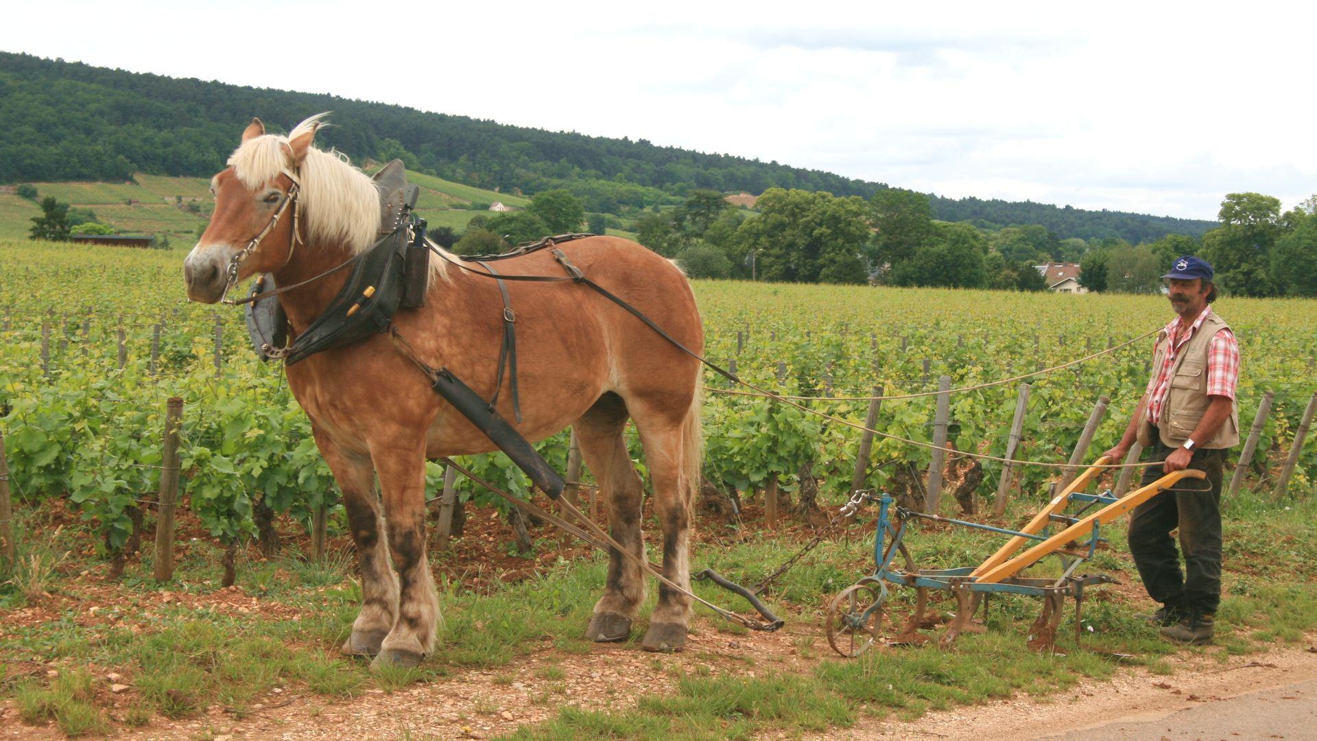 Ekologiskt vin, vad är det?